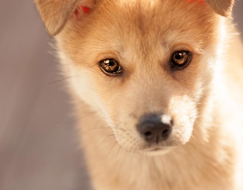 ドイツ型動物保護施設を支え ペット問題を生み出す社会の仕組みを変え